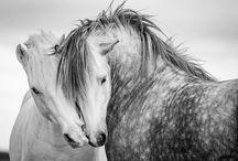 Horses / by Cheryl Thompson