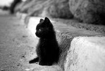 Cute pics / by Mirielle Bastiaans