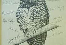 Who Me? ... Owls / by Pamela Kaiser