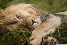 Endangered animals / by Purplemelie Mauve