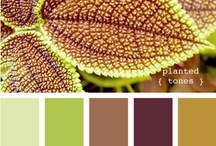Color Palettes  / by Jessica Jenkins