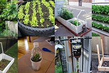 DIY Inspirations / Gardening Projects and Inspirations / by Maria Tortilla