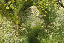Garden / by Anna Jungarå