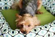 Puppy Time / things for my puppy and general #cuteness / by Ashley Wallace