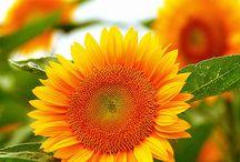 Flowery flowers / by Tammie Findley