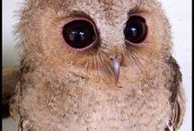 Animal - OWL / by Veren Evania
