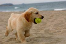 Puppies / by Kelleigh McKenna