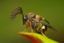 INSECTS / by Annie Britten