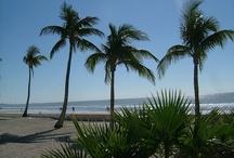 My Florida Neighborhood / by Karen Klingenberg