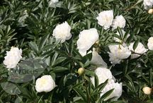 White flower bed / by The Tiny Card Company