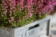 Garden Containers / by Laurie : )