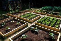 Garden ideas / by Stitch and Sparkle