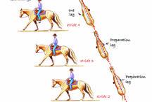 Training tips for horses / by Amanda Howard