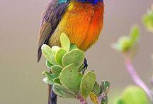 Birds & Butterflies / by Tina Grimm