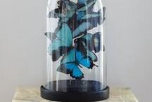 Papillons / by Accio Idea