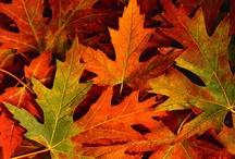 Fall / by Maranda Fulco