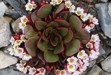 Succulents / by Gayle Snyder