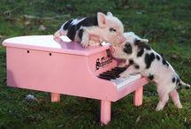 Cute tinies / by Madeline Weinstein