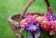 Flowers / by Chiho Suzuki