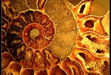 ~ ancient remnants, preserved, unimaginable, orphic...the story of the earth and time...~ / by GoldenLadyHawk RisingDove Robinson