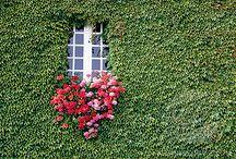 bloom / by Barbara Saia