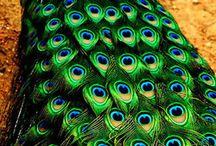birds / by Renata Gallo