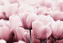 Flowers I love / by Michelle Reggear