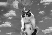 Animals / by Sara Lapczynski