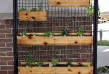 Patio gardening / by Elizabeth Underwood Grant