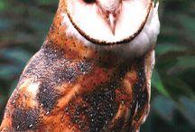 Owls, owls, owls. / by Rachel Fazekas