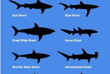 Sharks <3 / magnificently misunderstood  / by America Farias