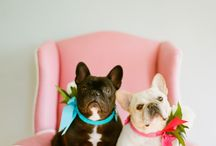 Doggies! / by ForYourParty.com