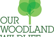 Our woodland wildlife / by Our wildlife 2012