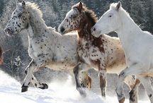 Horses / by Dorota Wrona