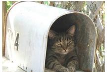 Cat.Enclosures / by Tia Mia  ♥