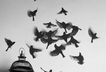 Birds / by Ceri Hopkins