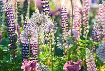 Garden Ideas / by Vicki Derks