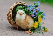 spring has sprung/ Easter / by Kathy S Gwin