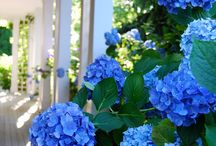 Flowers I Love / by Robbie Scroggs