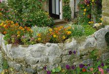gardens / by Susan Bellarosa