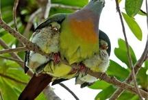 Parenting/Motherhood / Vida caoticamente hermosa…. / by Frances Nater