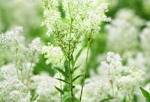 Herbal remedies / by Susan Erickson