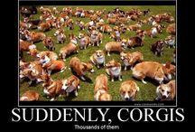Corgi Obsession / by Danuta Richards