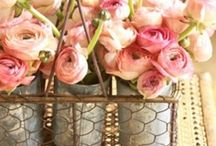 Rustic Blooms / by Cottonwood Ranch