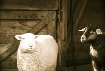 The farm / by Anastasia Chatzka