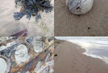 Great British Coast / All things coast, beach and seaside in the UK / by Daisies & Pie