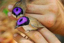 Birds / by Maria