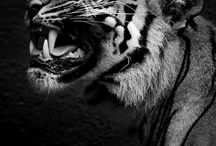 Roar / by Sandra Smith