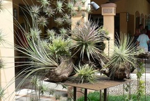 Plants...Etc; / Anything to do with indoor~outdoor plants, and Gardening!! / by Beverly Gibson
