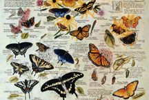Butterfly Info / by Cathy Kantowski